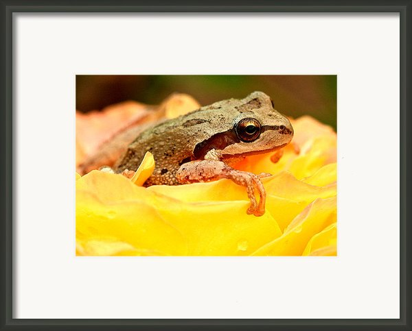 Life In The Rose Framed Print By Jean Noren