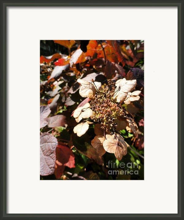Light As Paper Framed Print By Trish Hale