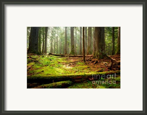 Light In The Forest Framed Print By Idaho Scenic Images Linda Lantzy