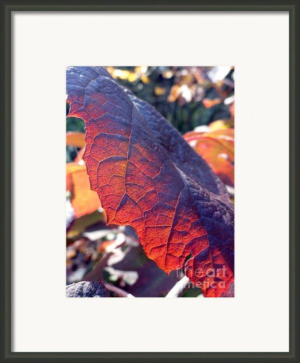 Light Of The Lifeblood Framed Print By Trish Hale
