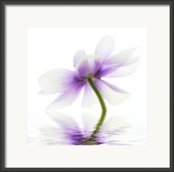 Lightness Framed Print By Kristin Kreet