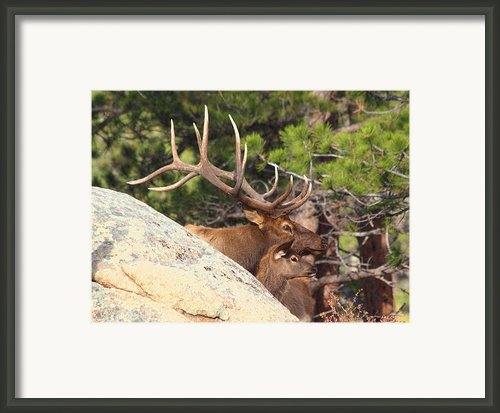Like Father - Like Son Framed Print By Shane Bechler