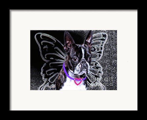 Lil Angels Boston Terrier Framed Print By Tisha Mcgee