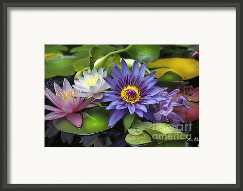 Lilies No. 16 Framed Print By Anne Klar