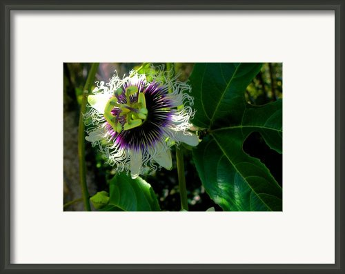 Lilikoi Framed Print By James Temple