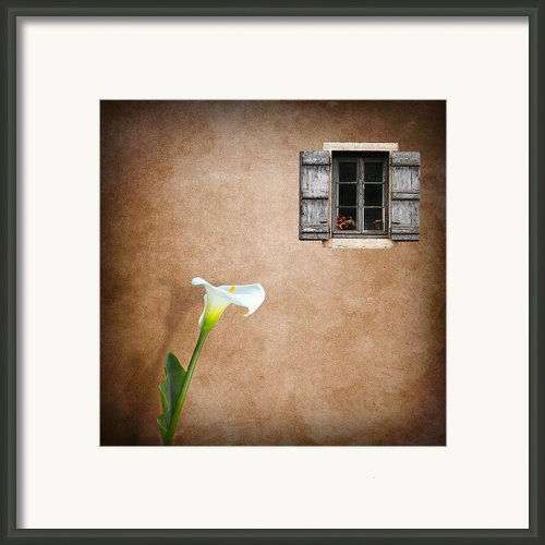 Lilly Framed Print By Ian Barber