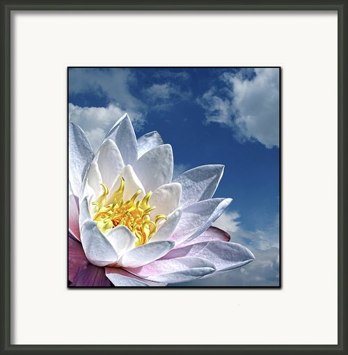 Lily Flower Against Sky Framed Print By Photo By Daveduke.