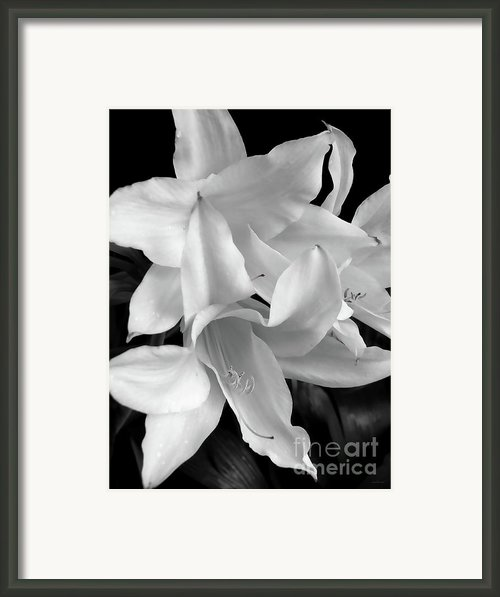 Lily Flowers Black And White Framed Print By Jennie Marie Schell