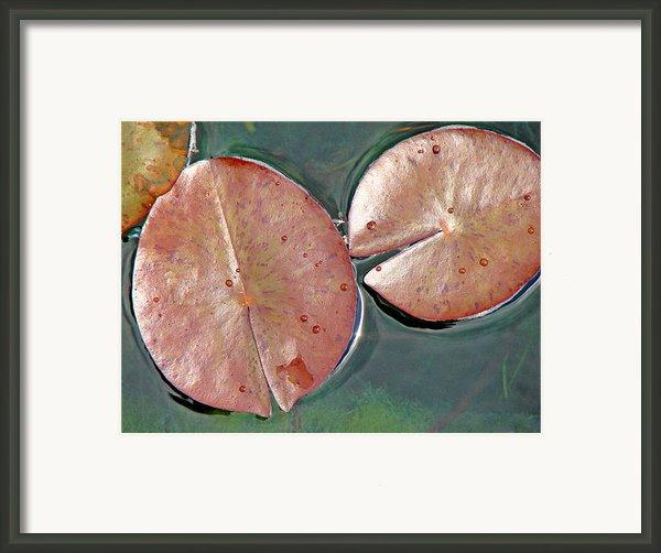 Lily Pads 1 Framed Print By Diana Douglass