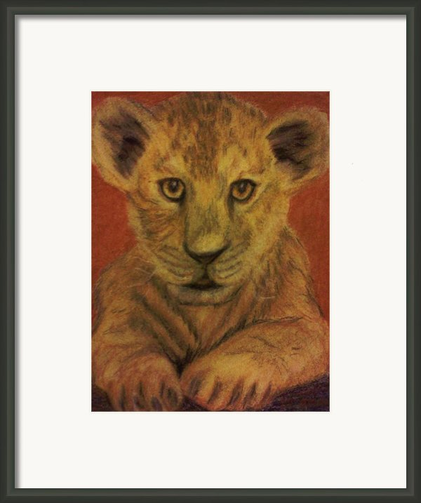 Lion Cub Framed Print By Christy Brammer