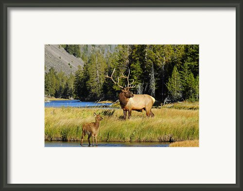 Little Big Man Framed Print By Sandy Sisti