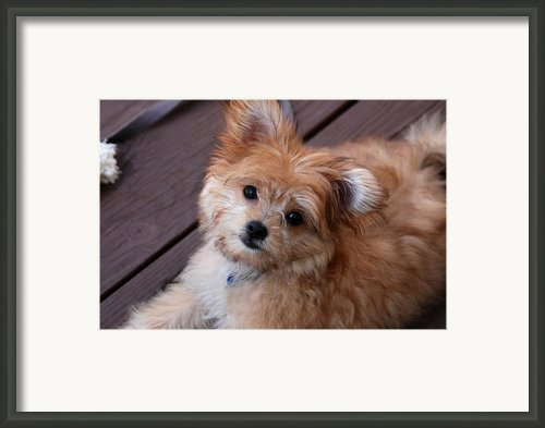 Little Darling Framed Print By Angie Mckenzie