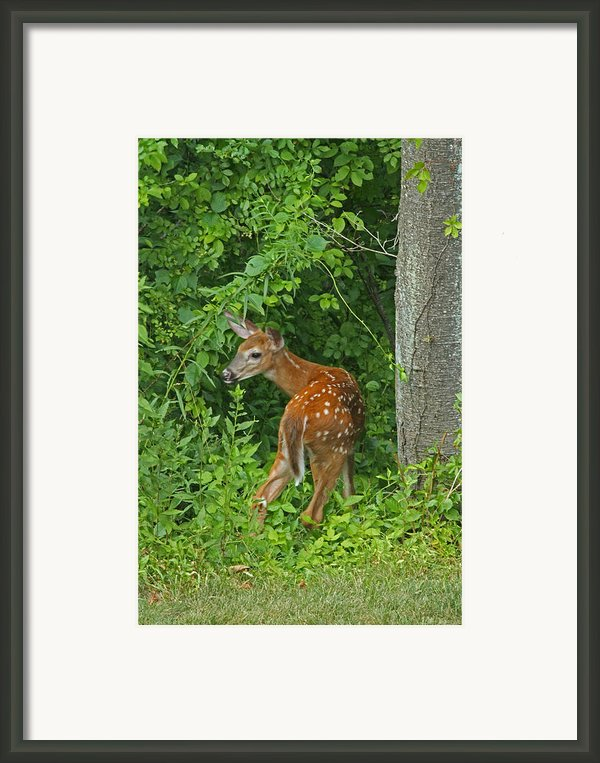 Little One Framed Print By Karol  Livote