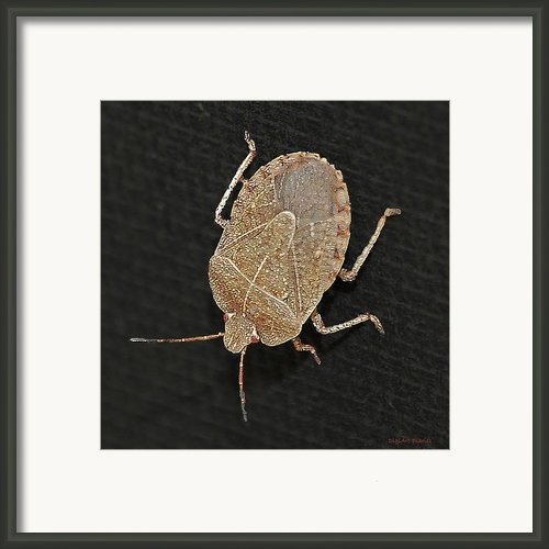 Little Stinker Framed Print By Digiart Diaries By Vicky Browning