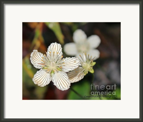 Little Wildflower Framed Print By Laurinda Bowling