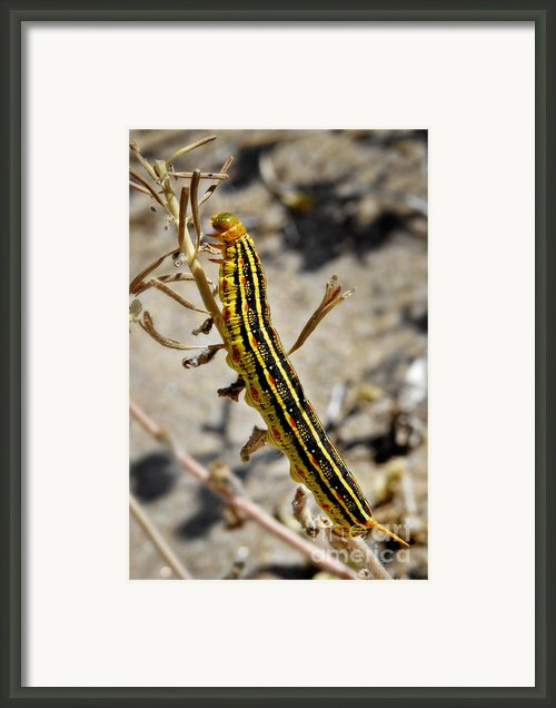 Living Desert Framed Print By Christine Till