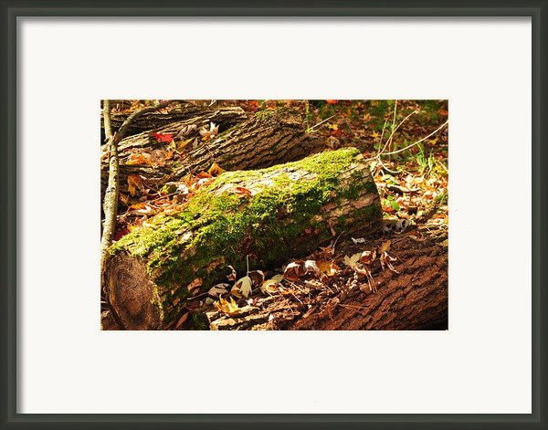 Logs  Framed Print By Puzzles Shum
