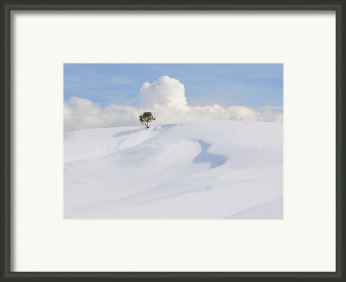 Lone Tree At Yellowstone National Park Framed Print By Anita Erdmann