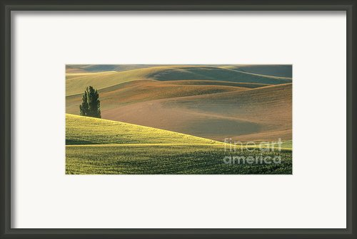 Lone Tree In The Palouse  Framed Print By Sandra Bronstein