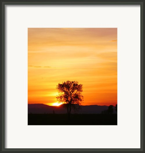 Lone Tree Sunset Framed Print By Nick Gustafson