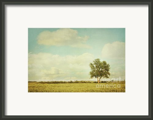Lonely Tree In Meadow With Vintage Look Framed Print By Sandra Cunningham