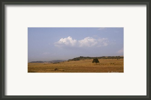 Lonely Tree Framed Print By Lyubomir Kanelov