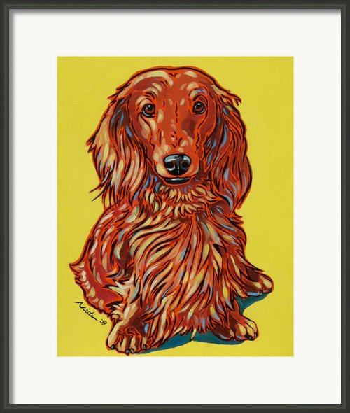 Long Haired Dachshund Framed Print By Nadi Spencer