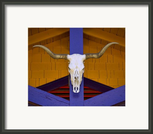 Longhorn Framed Print By Carol Leigh