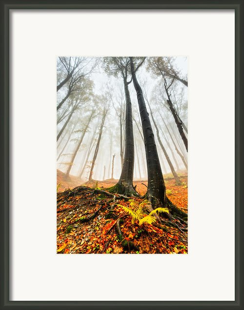 Lords Of The Forest Framed Print By Evgeni Dinev