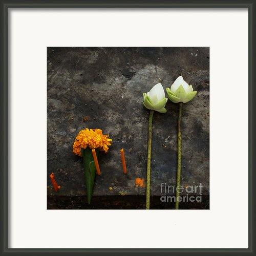 Lotus Flowers On A Thai Shrine Framed Print By Paul Grand