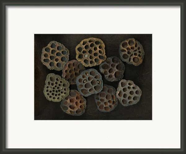 Lotus Pods Framed Print By Christian Slanec