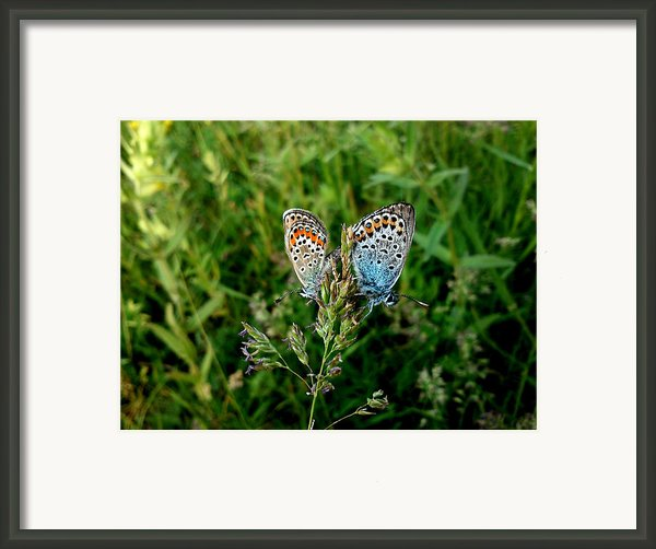 Loving Framed Print By Lucy D