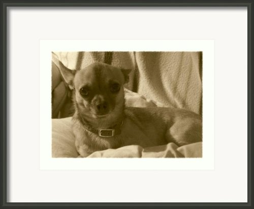 Loyalty At Its Best Framed Print By Amanda Vouglas