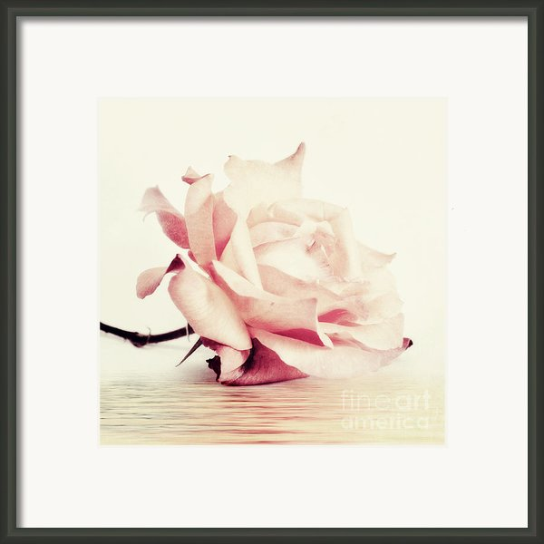 Lucid Framed Print By Priska Wettstein