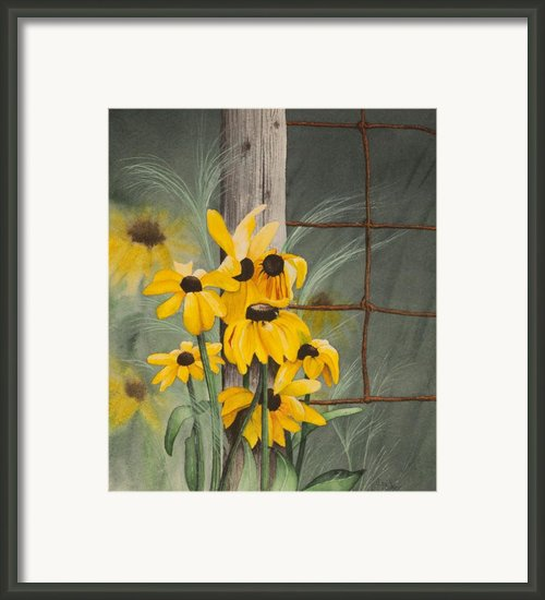 Lumineuses Marguerites Framed Print By Caroline Boyer