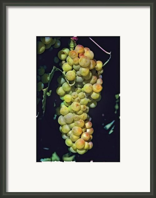 Luscious Chardonnay Framed Print By Lynn Andrews