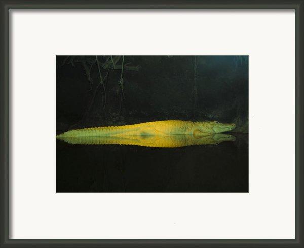 M Framed Print By Alicia Morales
