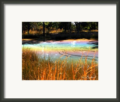 Magic Pond Framed Print By Melissa Wyatt