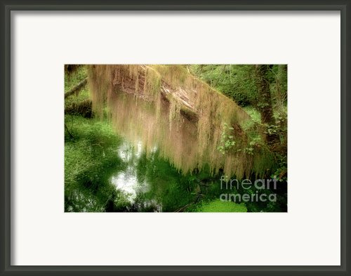 Magical Hall Of Mosses - Hoh Rain Forest Olympic National Park Wa Usa Framed Print By Christine Till