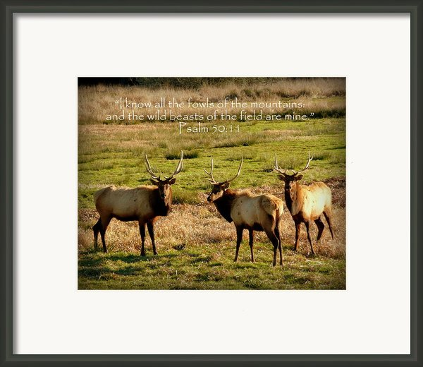 Magnificent Bull Elk Psalm 50 Framed Print By Cindy Wright