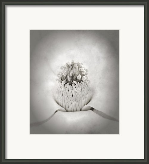 Magnolia 1 Framed Print By Rich Franco