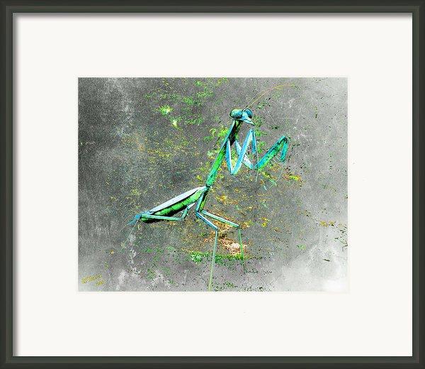 Mantis Framed Print By Arne Hansen