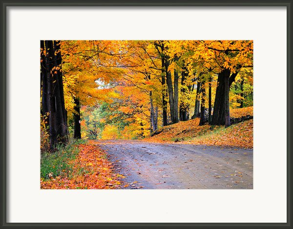 Maples Of Rupert Vermont Framed Print By Thomas Schoeller