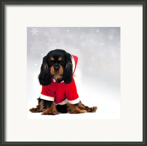 Marmaduke With Snowflake Background Framed Print By Jane Rix