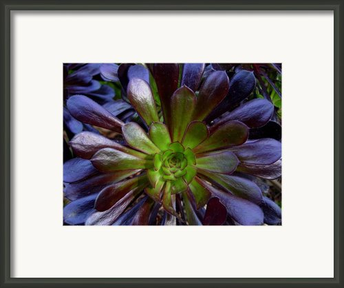 Massive Bursts Framed Print By Edan Chapman