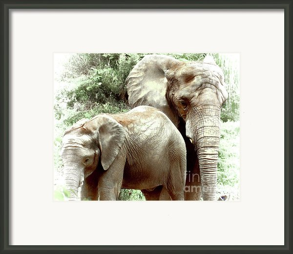 Matriarch Framed Print By Arne Hansen