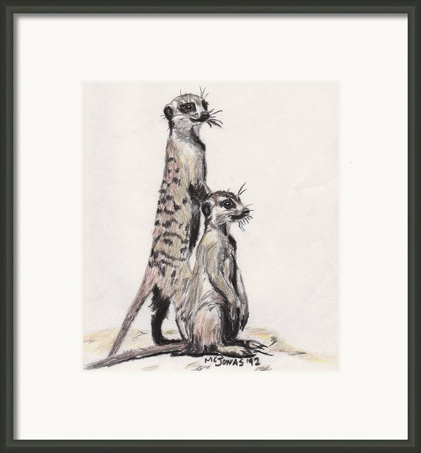 Meerkats Framed Print By Marqueta Graham