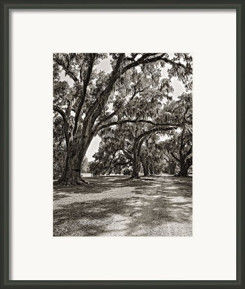 Memory Lane Monochrome Framed Print By Steve Harrington