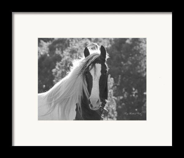 Mesmerizing Eyes Framed Print By Terry Kirkland Cook