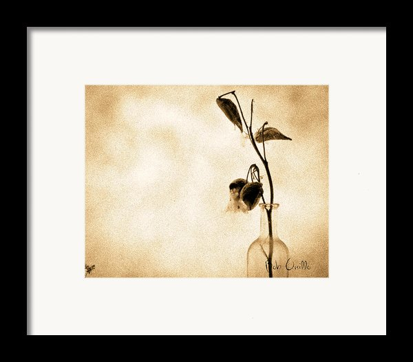 Milk Weed In A Bottle Framed Print By Bob Orsillo
